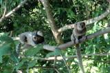 Os macacos no mato IMG_1876.JPG