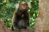 Os macacos no mato   IMG_1873.JPG
