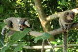 Os macacos no mato  IMG_1877.JPG