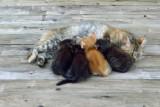 Absorbed kitten