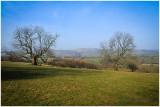 Marten Hill