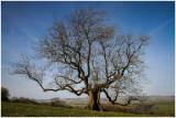Beauty in a tree