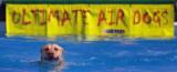 Air dog '13