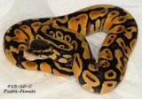 Pastel 13-10-C_female