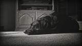 Lonely black dog.jpg