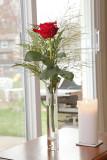 Rose of Joan.jpg