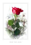 Rose for Joan