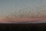 Groups of Birds