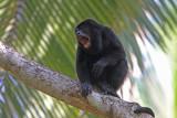 Mammals of Costa Rica and Panama