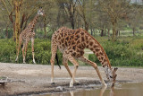 Mammals of Kenya