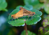 Butterflies & Moths