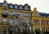Old Mainz in Spring Look
