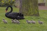 Six Babies