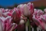 Pink amongst Pink