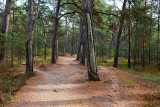 Darss' Forest
