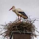 Nest on the Church Chimney