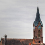 Nest on the Church Roof