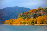 Autumn at the Rhine River