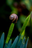 Snail Weather