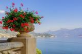 Flowers at the Villa del Balbianello