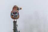 Mr. Peanut on a Foggy Morning