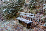 Frost Covered Bench