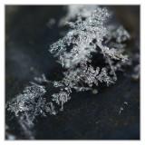 Icy Macro