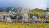 Frost in the Valley