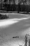 Tracks on the Ice