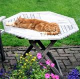 Monty resting