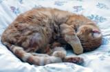 Monty - sleeping beauty!
