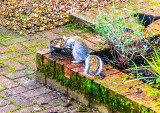 Squirrel in the garden