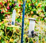 House garden and animals in the garden 2015