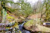 Stream at Tarn Howes