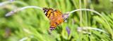 Lavender Springboard