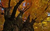 Lumière D`automne