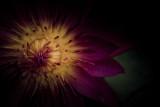Lotus 2006