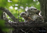 Cooper's Nest