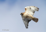 Red Tail Action