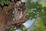 Let Sleeping Owls Perch