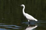Little Egret/Big Deal