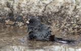 Spring Bath
