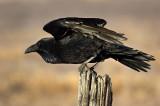Bye Bye Raven