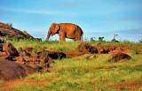 Gal Oya Elephant - Sri Lanka