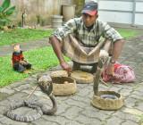 Snake Charmer - Sri Lanka