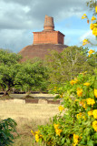 Ancient Dagoba - Sri Lanka