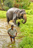 Mahout and his Elephant - Sri Lanka