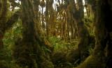 Solomon Islands Moss Forrest