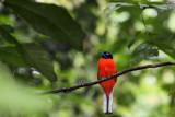 Bird at Bukit Rengit, Lancang, Pahang