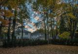 Foliage Revealed (50 house)